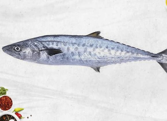 Seer Fish (Vanjaram)