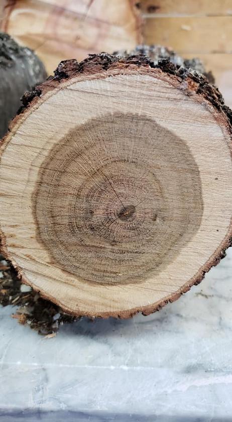 wavy leaf oak.jpg