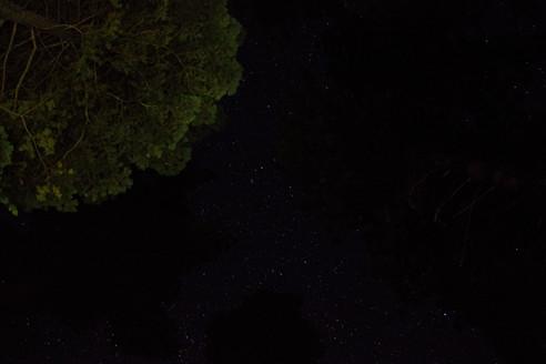 NightSky_1-Tree.JPG