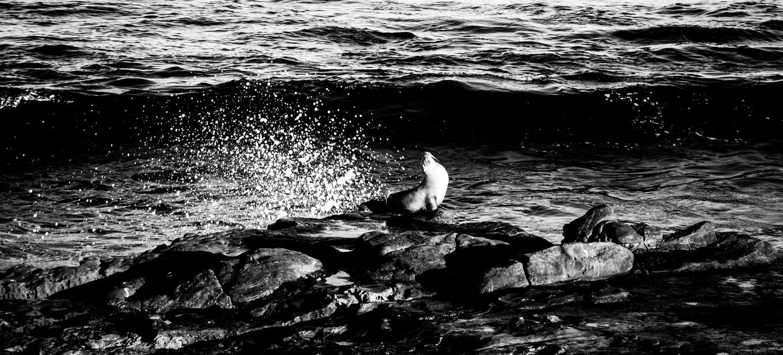 Wildlife_SeaLion5