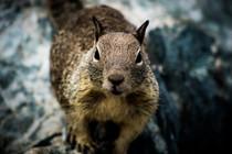 Squirrel_9.JPG
