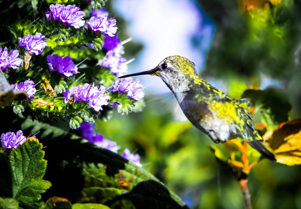 Hummingbird_1.JPG