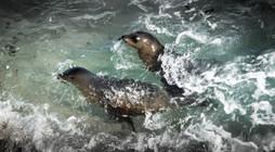 Wildlife_SeaLion2