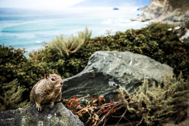 Squirrel_2.JPG
