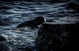 Wildlife_SeaLion1