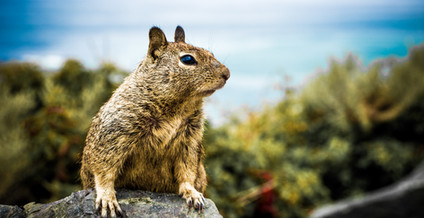Squirrel_1.JPG