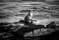 Wildlife_SeaLion3