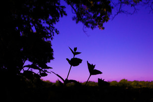 PlantSilhouette