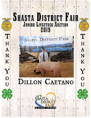 Shasta District Fair.jpg