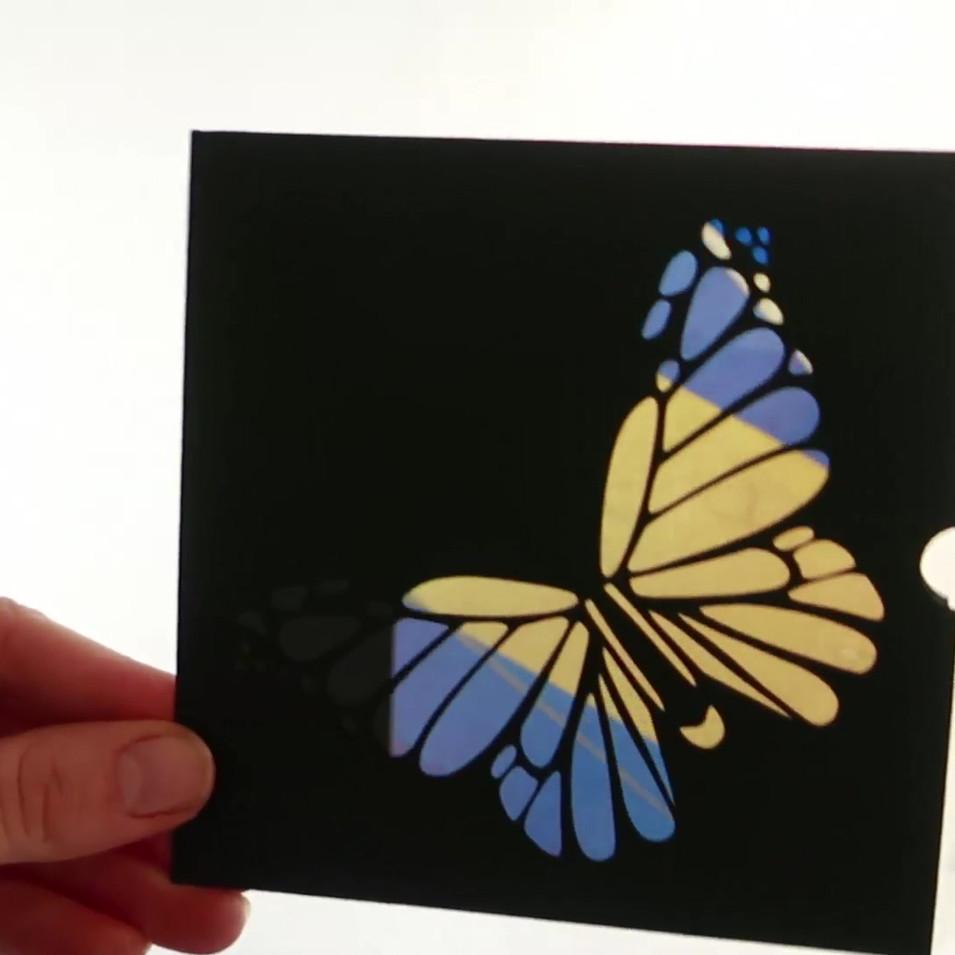 Carte pochette papillon