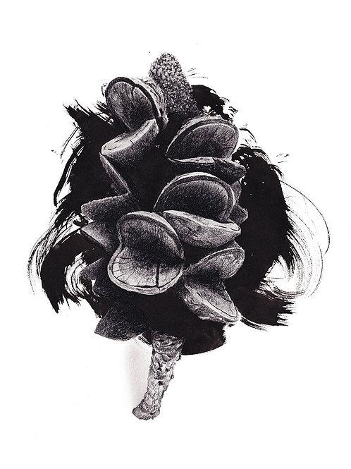 Banksia Serrata 2 Art Print