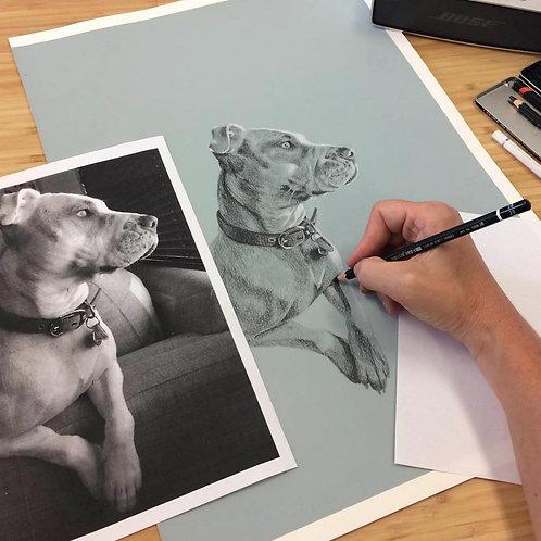 Order a Black & White Pet Portrait (one pet)