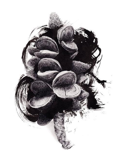 Banksia Serrata 1 Art Print