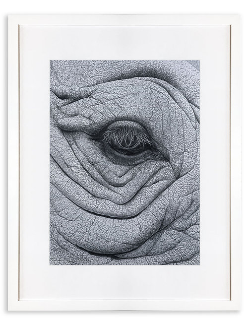 'In the Blink of an Eye.' White Rhino Framed Original Drawing