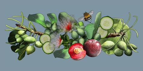 Kakadu Plum and Cucumber: Digital illustration