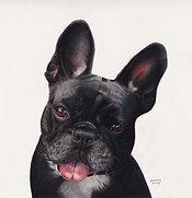 Order a COLOUR Pet Portrait (one pet)