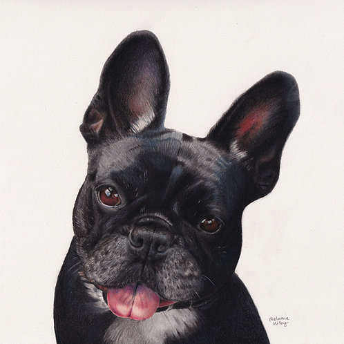 Order a COLOUR Pet Portrait (one pet)