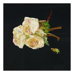 Black roses_Garth_Nichol.jpg