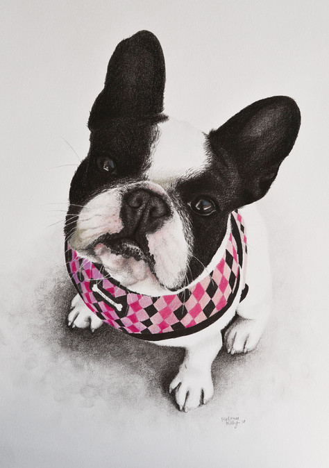 Millie: Pencil on paper