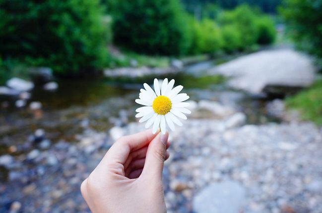 flower-2222058_1920_edited.jpg