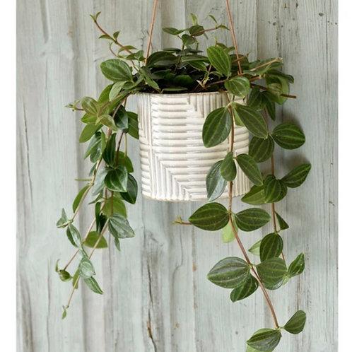Modena hanging planter