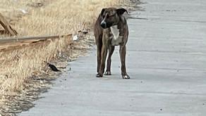 Stockton Community Love For a dog
