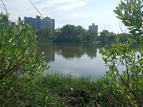 view of riverdale .jpg