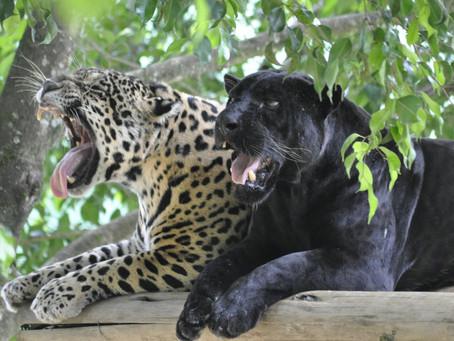 Mesmo sem visitantes, Zoo Pomerode mantém rotina de cuidado com os animais