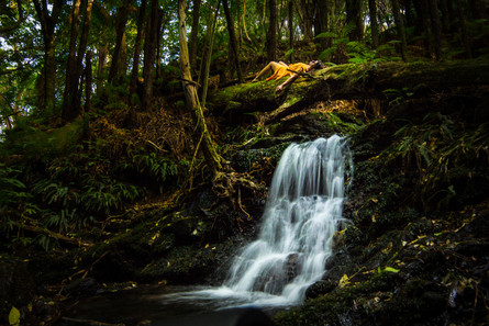 Dreaming in the Hinewai, NZ