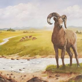 Big Horn Sheep. Janice Cornett-Ching, Ac