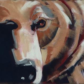 Grizzly  pastel 15x19 $500.jpeg