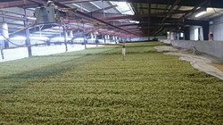 Hop Dryer Yakima Hops