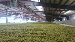 Hop Dryer Yakima Valley Wapato