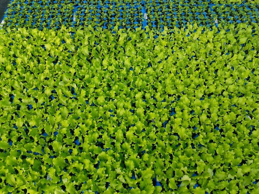 Santler-Gemüse-Verdura