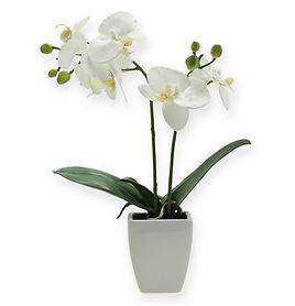 orchidee santler.jpg