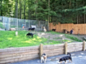 Dogs enjoying time outside at sanctuary