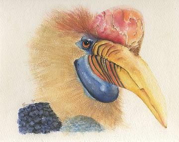 wrinkled hornbill slighter.jpg