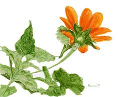 Orange Flower with Dew Drop