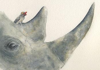 rhino head 2.jpg