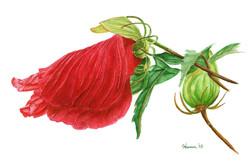 Red Floppy Flower