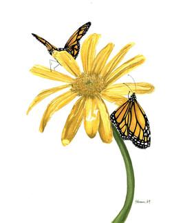 Monarchs on Yellow Daisy