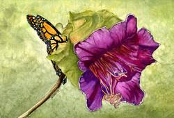 Purple Flower & Monarch Butterfly