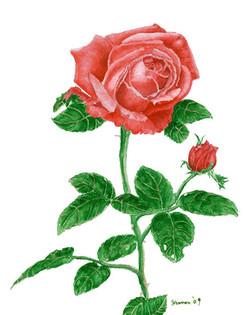 Rose With Single Bud