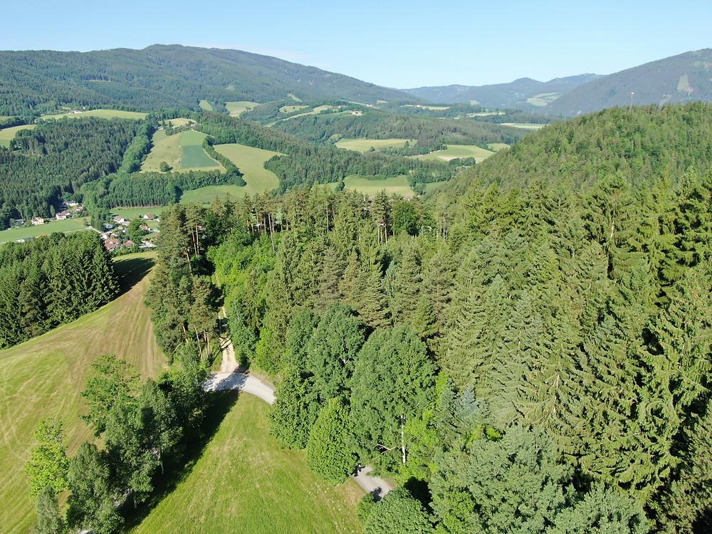 Klosterwald Kirchberg am Wechsel