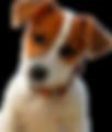 Ferienwohnung Rügen Hunde erlaubt