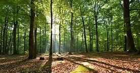 reforestacion.jpg