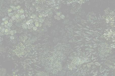 AEnB2Urdf6-kuAWmrq-bXW2lvGfX-6E-htWHTO0I