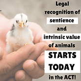 Sentience law starts today