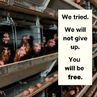 We all tried. Battery cages.png