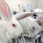 lab rabbits.jpg